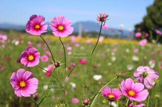 植物にピンクの花の写真・画像素材[1124740]