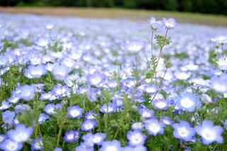近くの花のアップの写真・画像素材[1125363]
