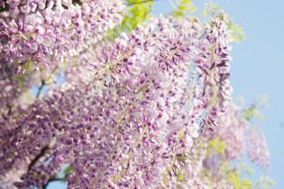近くの花のアップの写真・画像素材[1125368]