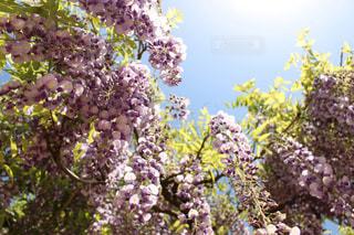 近くの花のアップの写真・画像素材[1138209]