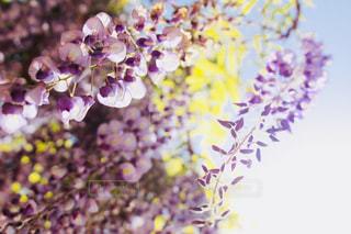 近くの花のアップの写真・画像素材[1138218]