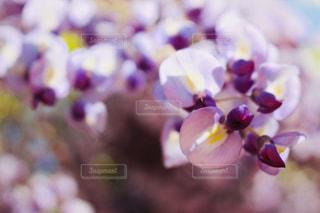 花のぼやけた画像の写真・画像素材[1138219]