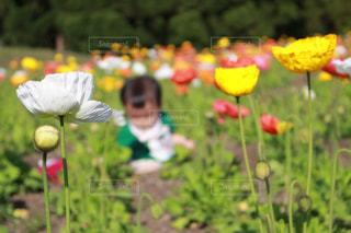 草の中の黄色い花の人の写真・画像素材[1158682]