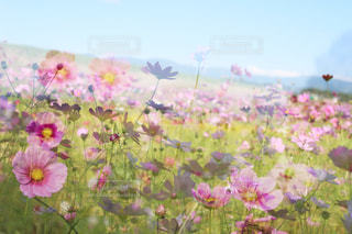 近くの花のアップの写真・画像素材[1462657]