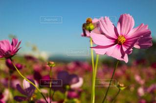 近くの花のアップの写真・画像素材[1462660]