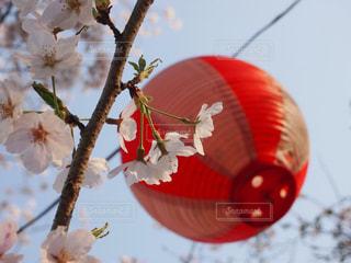 春,桜,ピンク,花見
