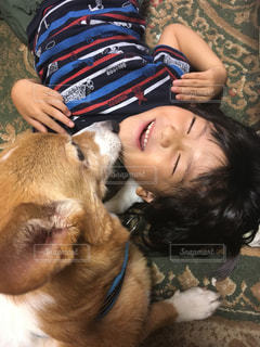 犬をかわいがる人の写真・画像素材[822462]