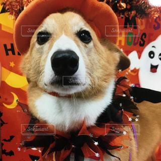 帽子をかぶった犬の写真・画像素材[850529]