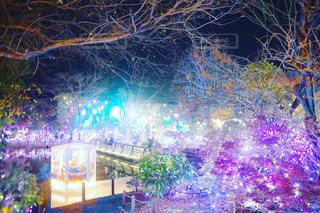 冬,綺麗,イルミネーション,クリスマス,一眼レフで撮影