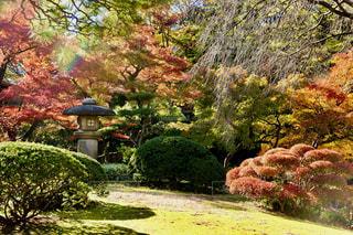 庭の大きな木 - No.890387