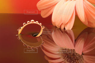 水鏡の花びらハートの写真・画像素材[1127022]