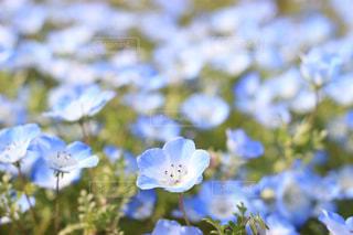 埼玉県,大宮,花の丘公園