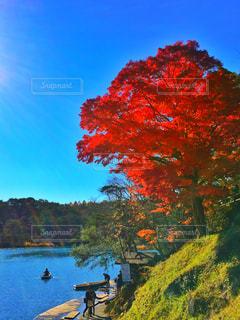 秋色の写真・画像素材[871986]