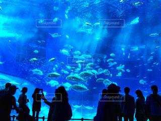 魚,青,水族館,沖縄,旅行,美ら海水族館