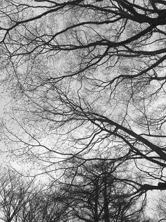 毛細血管のような木々の写真・画像素材[814457]