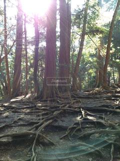 京都,観光,パワースポット,鞍馬寺,鞍馬,奥の院,木の根道