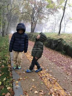 秋の森の写真・画像素材[821486]