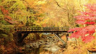 紅葉と橋の写真・画像素材[764910]