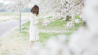桜の季節の写真・画像素材[1839483]