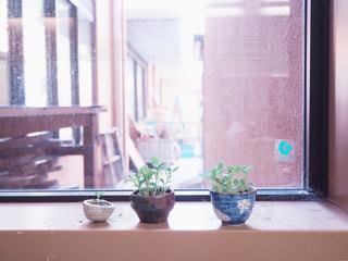 植物のある暮らしの写真・画像素材[989881]