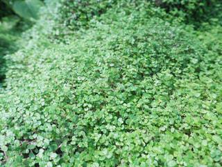 緑の写真・画像素材[995271]