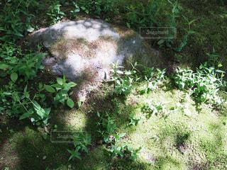 緑の森の写真・画像素材[996612]