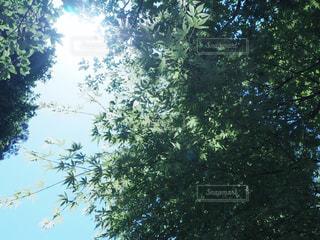 森の写真・画像素材[996613]