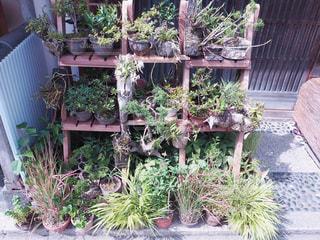 庭の植物の写真・画像素材[996920]