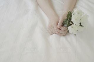 花との写真・画像素材[1018410]
