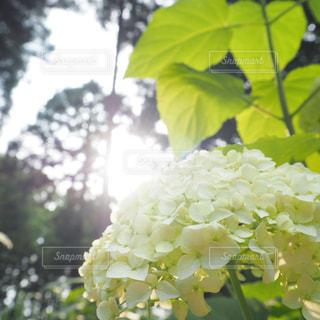 6月の午後の写真・画像素材[3212093]