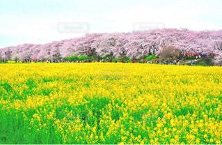 春の集いの写真・画像素材[1153633]