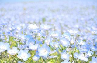 ブルーのじゅうたんの写真・画像素材[1153640]
