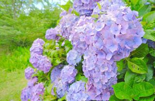 近くの花のアップの写真・画像素材[1157087]