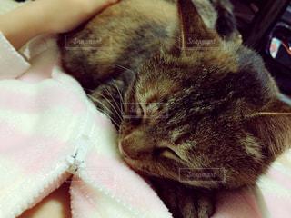 近くに眠っている猫のアップの写真・画像素材[1622737]