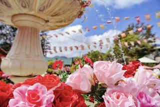 ピンクの花のグループの写真・画像素材[1791665]