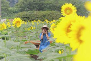 黄色の花の人の写真・画像素材[1831028]
