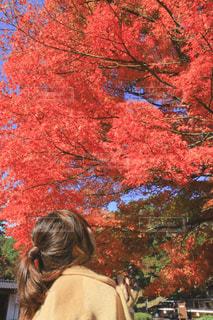 女性,秋,紅葉,後ろ姿,もみじ,人物,人,後姿