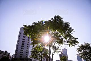 夕日,ビル,木,夕暮れ,散歩,木漏れ日,横浜,野外,お散歩,おでかけ
