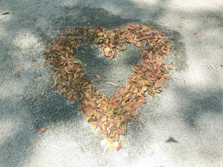 葉っぱ,落ち葉,ハート,地面