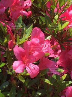 植物にピンクの花 - No.848107