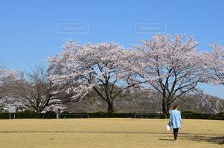 公園で凧の飛行男 - No.1121046