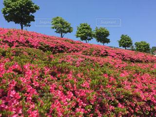 ピンクの花は緑豊かな緑のフィールドに立っています。 - No.1122383