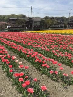 フィールドに赤い花 - No.1124676