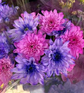 明るい花の写真・画像素材[1399508]