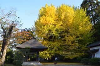 空,森林,屋外,樹木,秋空,秋の空