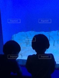 チアナゴをガン見の写真・画像素材[2612379]