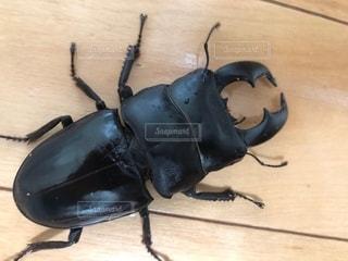木の表面に立っている昆虫の写真・画像素材[2709936]