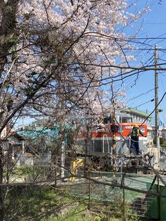 空,桜,屋外,電車,樹木,2020,踏み切り,さくら