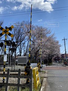 空,桜,屋外,樹木,明るい,通り,踏み切り,さくら
