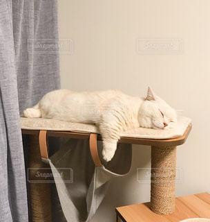 椅子に座って猫の写真・画像素材[2085454]